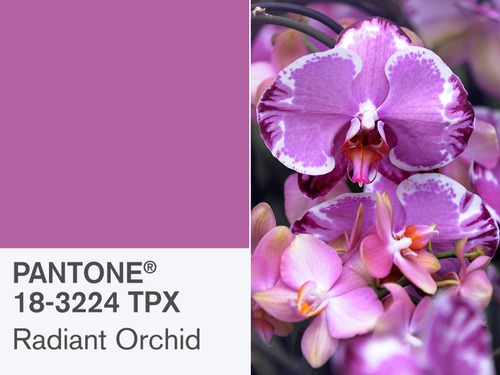 home staging color orchid