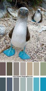 staging diva color palette